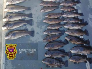 illlegaly harvested RI tautog