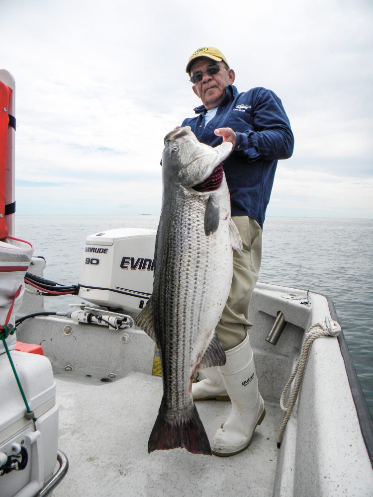 The author with a 50-plus pound fish that ate a live eel on the low slack tide on an overcast late-June morning. Two of his clients were fortunate to pull 60s from that same area, but not without taking the boat into and around the rocks to recover the line wrapped around the sharp boulders.