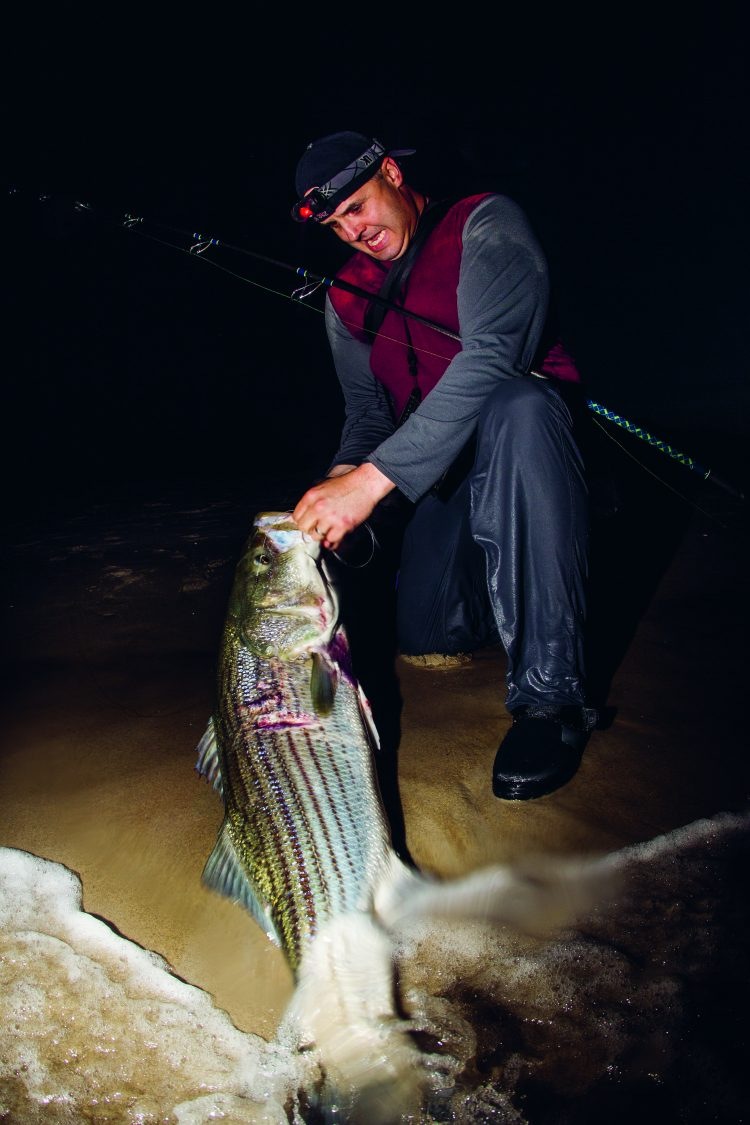 Notice the wound along the lateral lines of this striped bass.