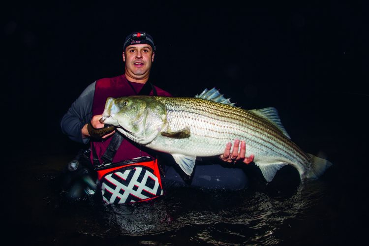 A large striper caught on the North Shore of Massachusetts.