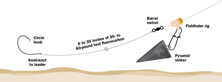 A fish finder rig is common striped bass on sandy beaches in New Jersey and Long Island.