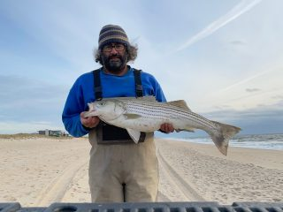A mid-teen sized striper caught in the surf.