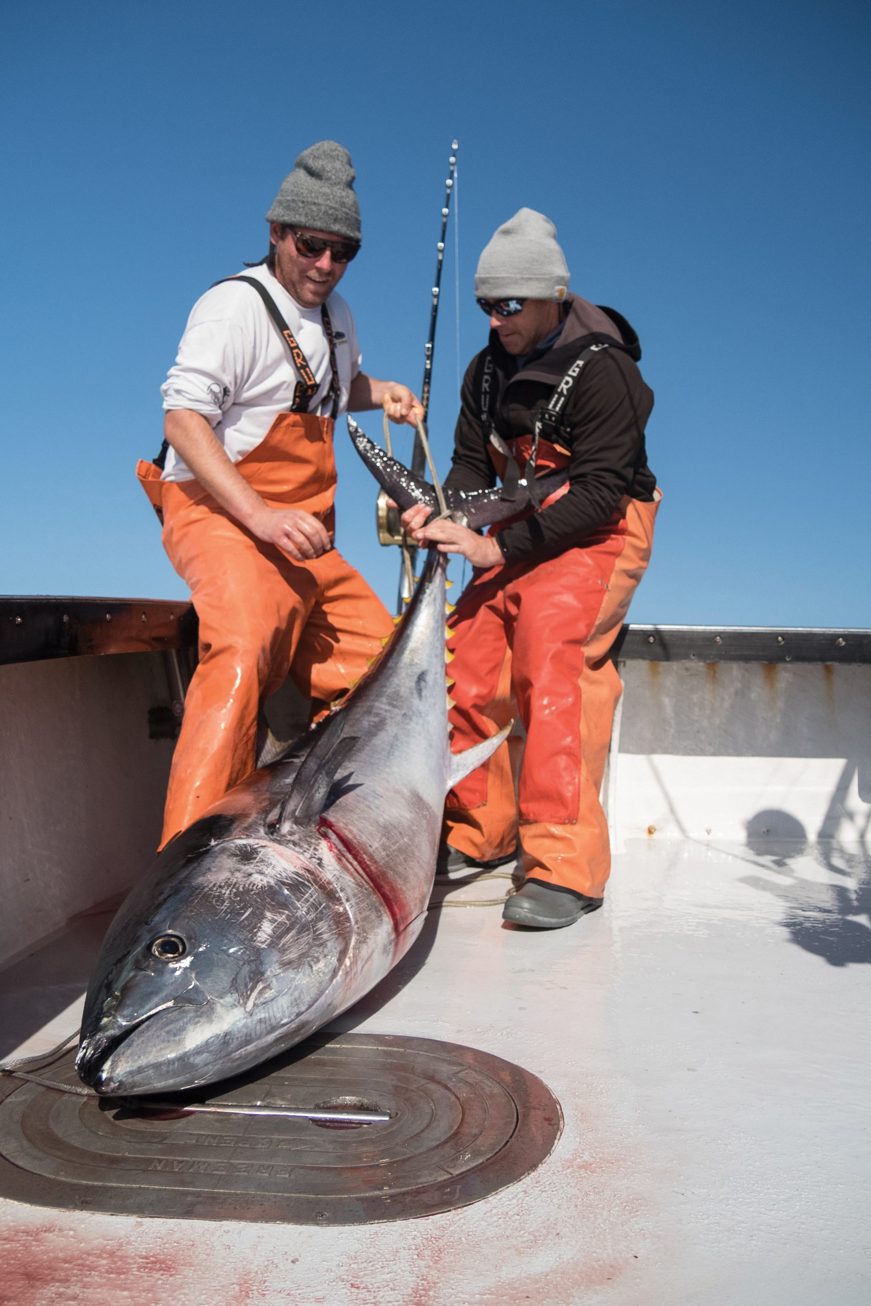 Tuna under 73-inches, like this one held by Lange (left) and Clothier, can be kept by recreational anglers.