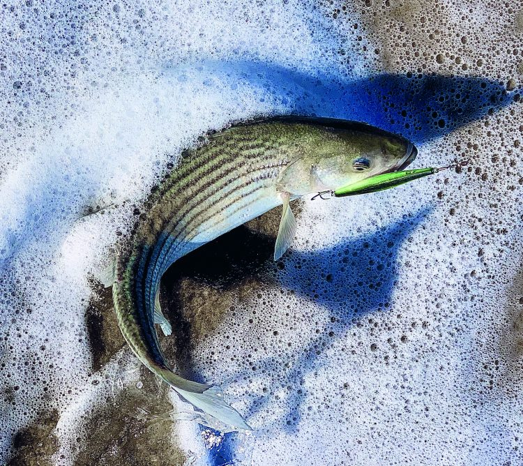 Slender lures, like soft-plastic paddletails and needlefish work well during the sand eel run.