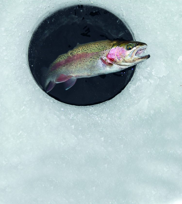 There aren't many great venues for trout fishing through the ice in New Jersey, but the small Green Turtle Pond receives a large winter stocking for its size.