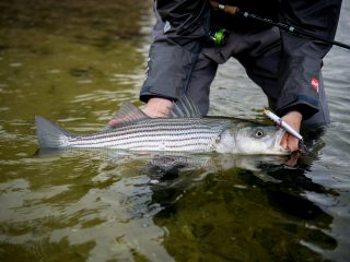 The party boats continue to catch a mixed bag, while shore anglers are finding keeper-sized holdovers in the rivers, and the local ponds are fishing well for stocked trout.