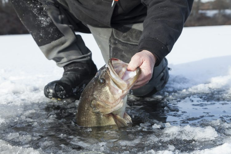 Ice fishing often produces some of the biggest fish of the year for freshwater anglers; Andy Nabreski with a 6-pound largemouth.