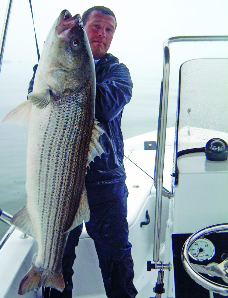 The tube and worm may be a weird-looking lure, but there's no disputing its effectiveness on large stripers. Captain Chris Elser displays a Long Island Sound monster that fell to the tube and worm.