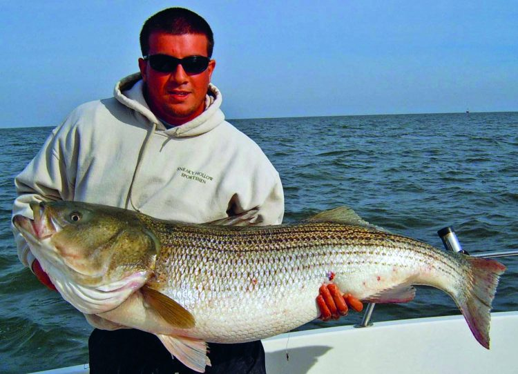 From the 2000s to early 2010s, one of those places was Delaware Bay in November. Robby Jiacopello caught this jumbo D-Bay bass on a chunk with Captain Scott Newhall.