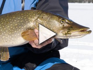 Tip-Up Fishing for Northern Pike