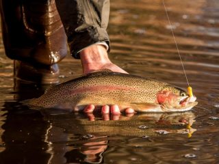 With fair and consistent weather ahead, trout fishing at the kettle ponds should be steady over the next few days.