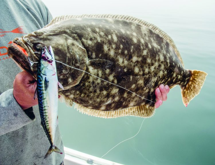 Big fluke are ferocious predators – they won't think twice about attacking a large bait.