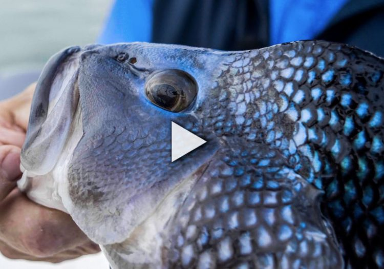 Season 18, Episode 2: Cape Cod Black Sea Bass (On The Water Angling Adventures)