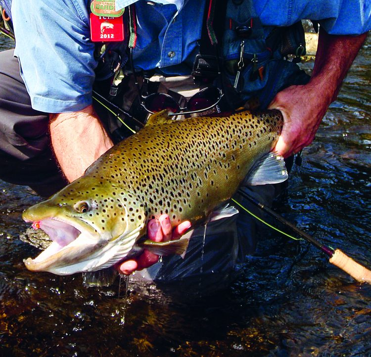 The southeast corner of Lake Ontario is rocky and heats up in the spring sun, bringing brown trout into shallow water.