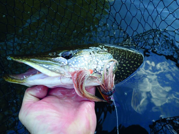 Pike flies have a mesmerizing action as they come through the water, moving side to side, like a big, wounded baitfish.