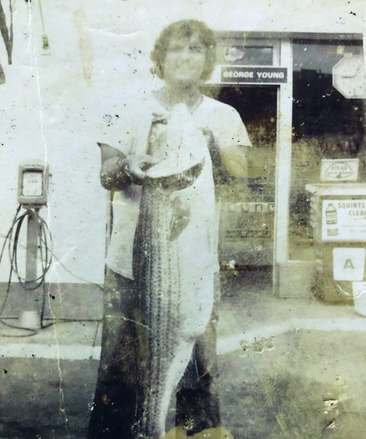 Giant 50 Pound Striped Bass