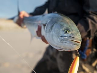 New Jersey Bluefish