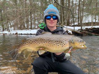 Connecticut Brown Trout