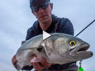 Shore Fishing for Bluefish