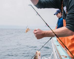 Photo Credit: Massachusetts Division of Marine Fisheries