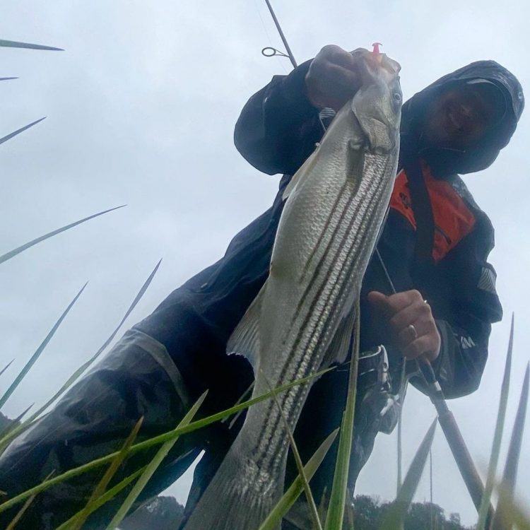 Striped Bass Cape Cod