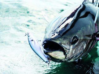 Strategic Angler Custom Lures
