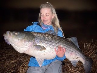 Erica O'Donnell 52 Inch Striped Bass