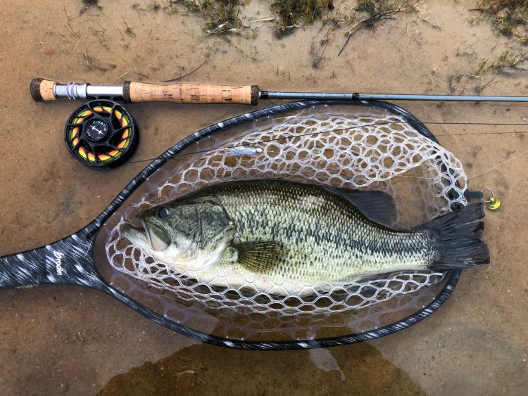 Largemouth bass fly fishing