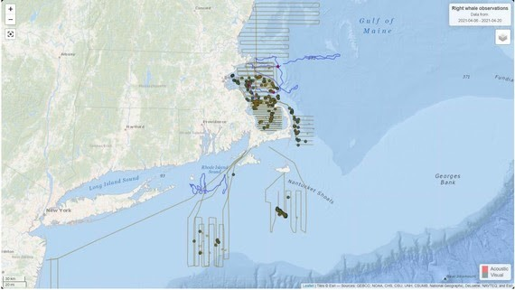 NOAA Right Whales Map (1)