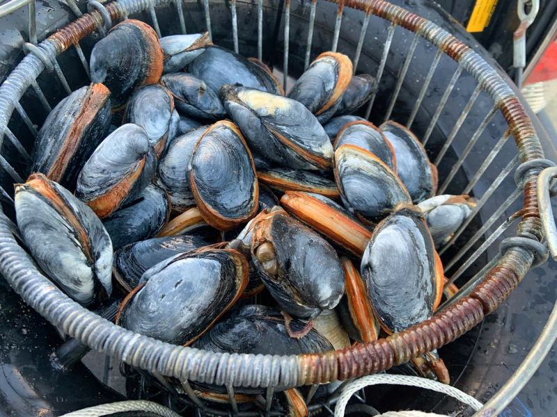 The 3000 Clam Project