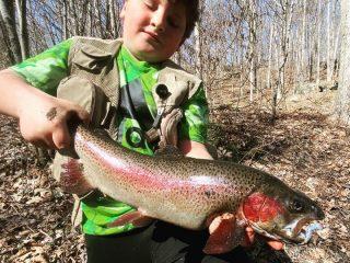 Connecticut Trout