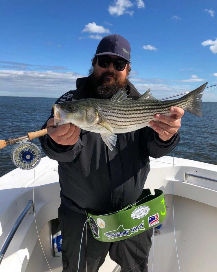 Chasing Tails Striped Bass