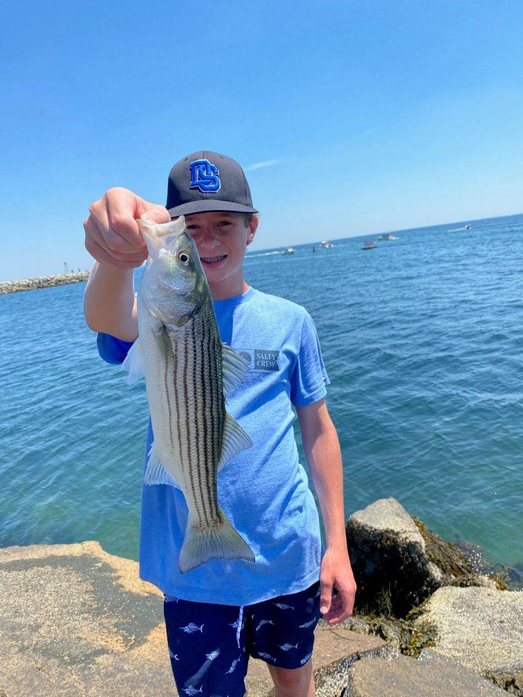 Massachusetts Striped Bass