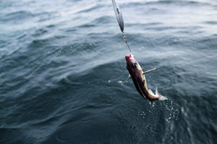 Haddock Research