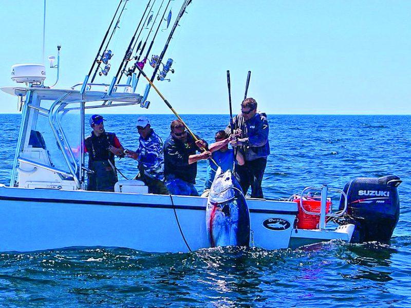 Light Tackle Bluefin Tuna