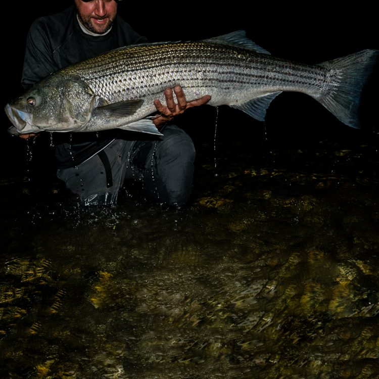 Striper fishing with eels