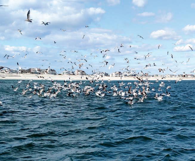 Albies Birds