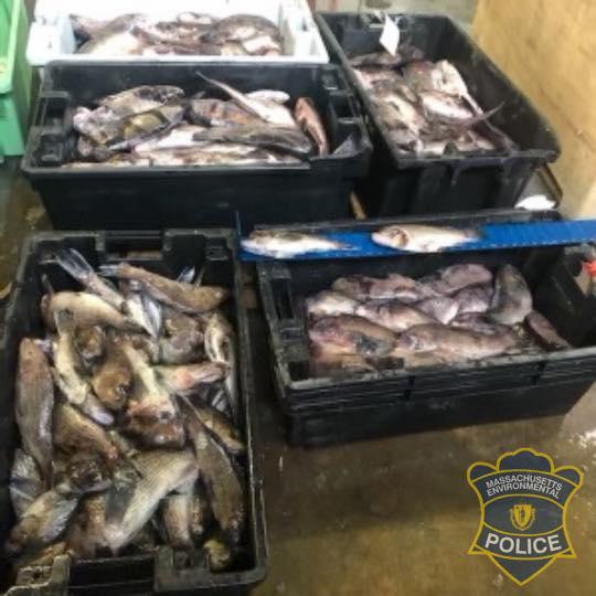 Massachusetts Fish Poachers